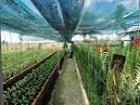 Thời hạn đăng ký bảo hộ cho Giống cây trồng là bao lâu?