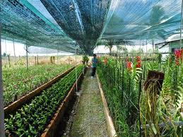 Xâm phạm Quyền về Giống cây trồng